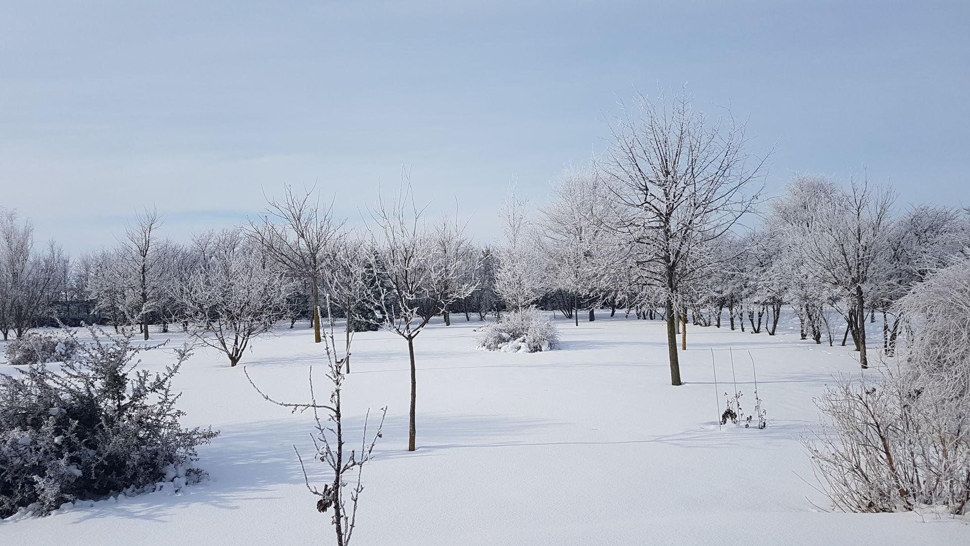 Der ganz strenge Frost mit annähernd -30 Grad hat uns bisher verschont.